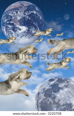 Flock of dogs flying through imaginary atmosphere