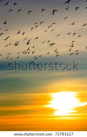 Flock of ducks at sunset over the river