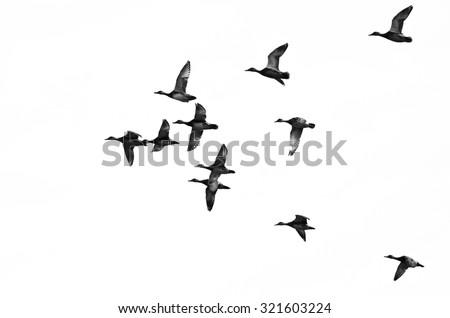 Flock Of Ducks Silhouette