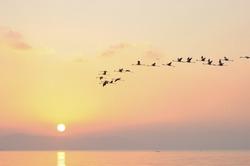 Flock of Flamingoes Birds in the sky