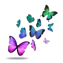 flock of flying colored butterflies isolated on a white background