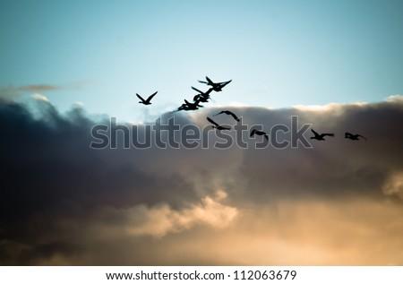 Flock of flying geese silhouette