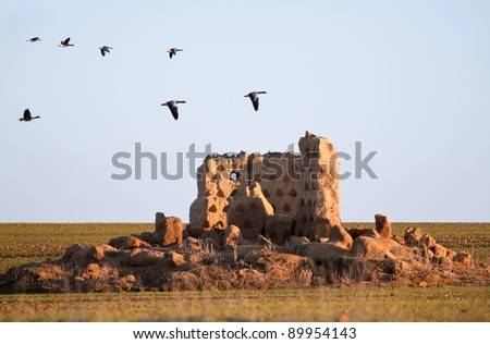 Flock of geese flying over the ruins of a loft at sunset