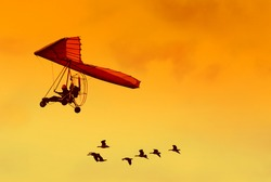 Flock of geese flying with their human friend in his ultra light airplane at sunset