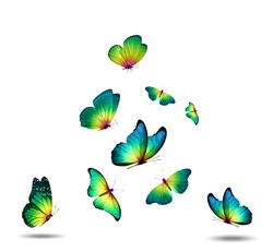 flock of green butterflies isolated on a white background. High quality photo