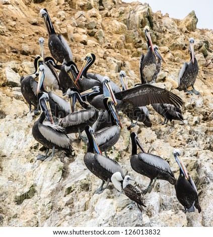 Flock of pelicans over the rocks of the Ballestas Islands, Peru, South America