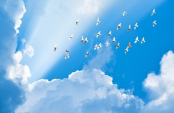 flock of pigeons flying in blue sky among clouds to meet sun beam