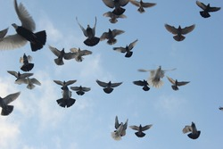 Flock of pigeons flying in front of cloudy sky. Pigeon fly around mosque