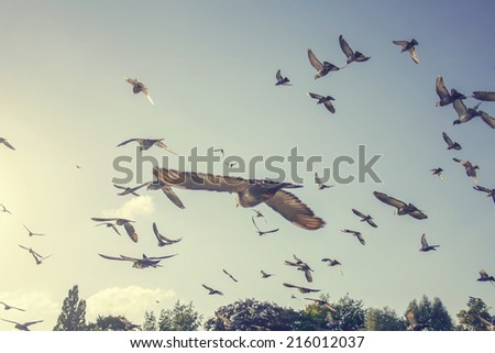 flock of pigeons flying in the air away from viewer