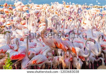 Flock Pink