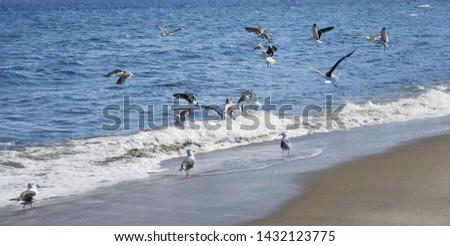 Flock of seabirds on the beach #1432123775