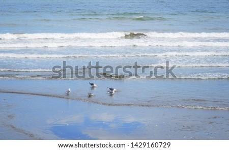 Flock of seabirds on the coast #1429160729