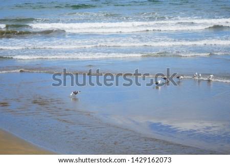 Flock of seabirds on the coast #1429162073