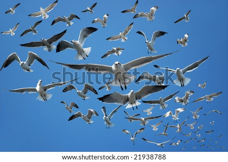 Flock of seagulls flying in the air