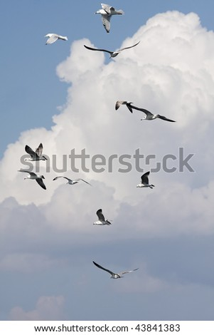 flock of seagulls, Lesbos, Greece - stock photo