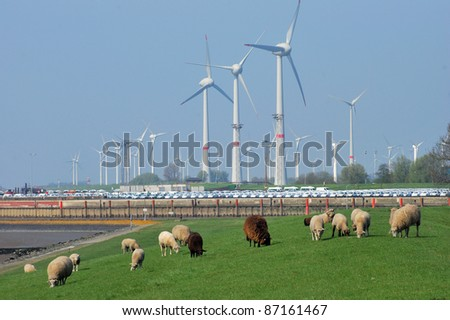 Flock of sheep on a coast line and windmiill - stock photo