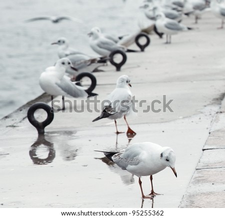 Flock of the wild seagulls at manmade pier