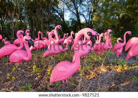 Flock of very pink plastic flamingos in the forest.