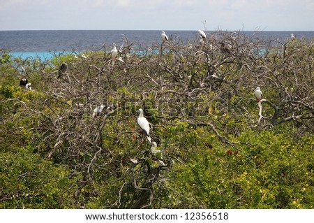 of white sea birds nesting