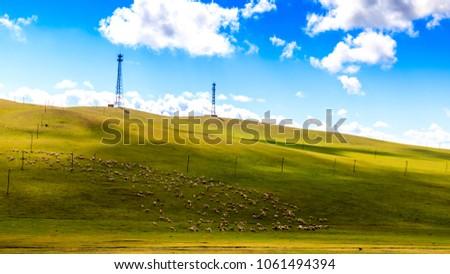 Flock on the grasslands of Inner Mongolia #1061494394