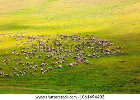 Flock on the grasslands of Inner Mongolia #1061494403