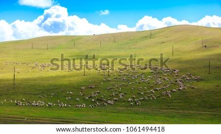 Flock on the grasslands of Inner Mongolia #1061494418