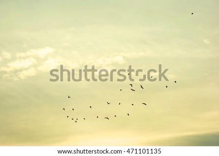 flocks of birds in the sky #471101135