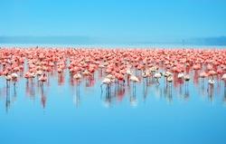 Flocks of flamingo. Africa. Kenya. Lake Nakuru