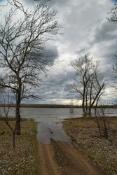 Flooded bare trees on the banks of the spring river. Spillage of water. High water. Red grass. Spring evening landscape.