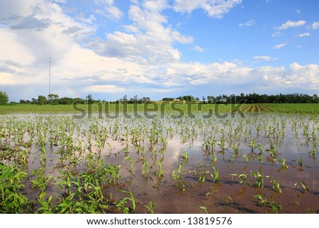 Flooded cornfield in the Midwest, after a severe storm