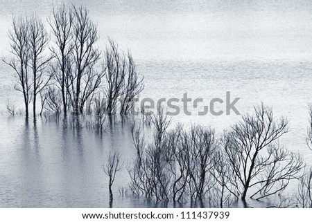 flooded dead trees