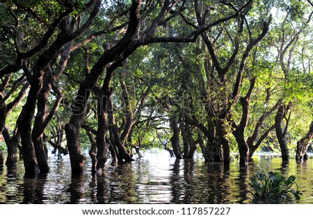 flooded forest of mangrove trees