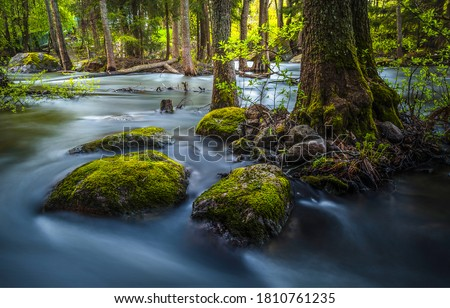 Flooded forest trees river water view. Forest river flooded trees. Flooded trees river forest