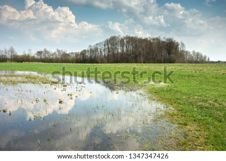 Flooded meadow, forest on the horizon and clouds in the blue sky reflecting in the water #1347347426