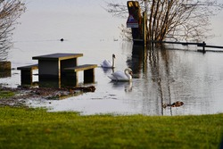 Flooded pick nick place at lake Greifensee, Maur, with two white swans.