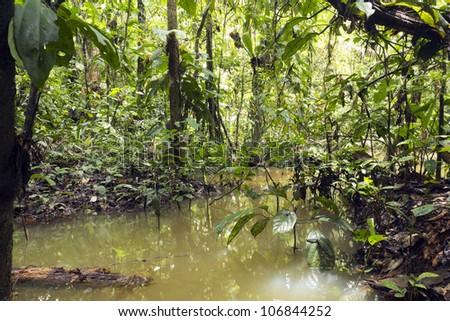 Flooded pool in rainforest in the Ecuadorian Amazon