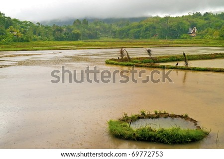 Flooded rice plantation in a bad weather landscape