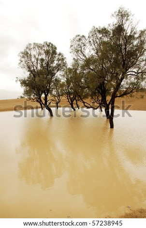 Flooding in the Israeli desert