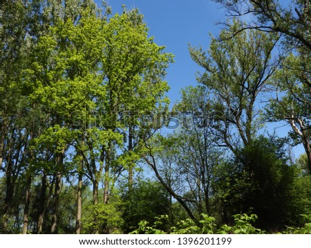 Floodplain forest in meanders, trees, bushes and woody plants typical flora for meanders. In the border meanders, the dominant wood species is the willow, white willow and black poplar. #1396201199