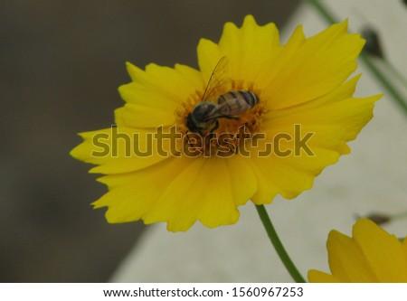 Flor amarela com uma abelha. Foto tirada em um dia nublado, no Parque Ibirapuera, São Paulo, Brazil. Foto stock ©