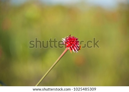 Shutterstock Flor en el Campo