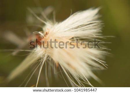 flor fuera de foco  Foto stock ©