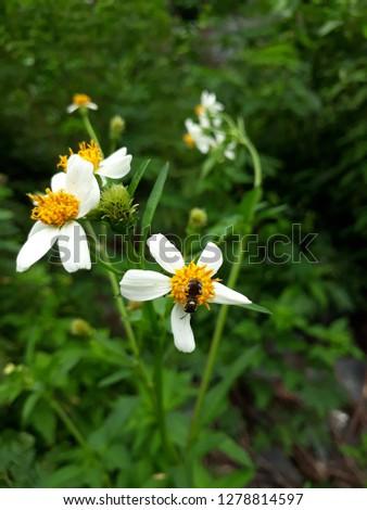 flora and fauna #1278814597