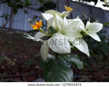 flora and fauna #1278816874
