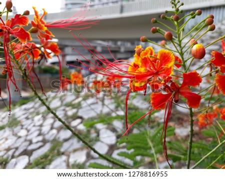 flora and fauna #1278816955