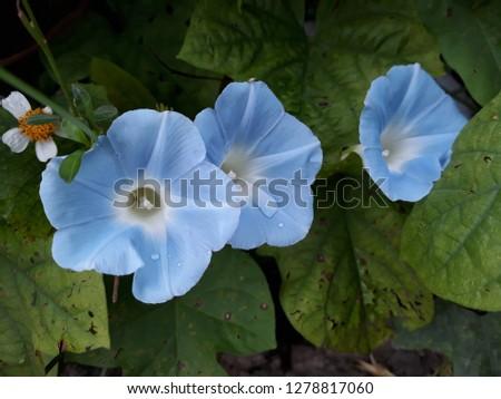 flora and fauna #1278817060
