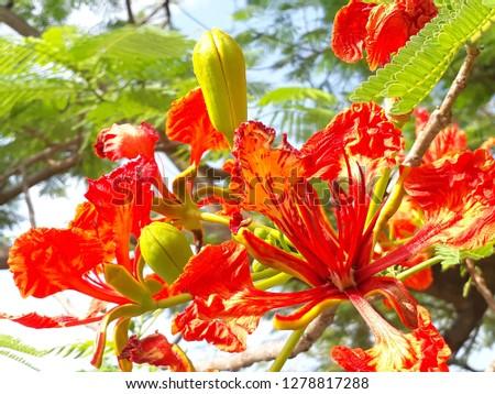 flora and fauna #1278817288