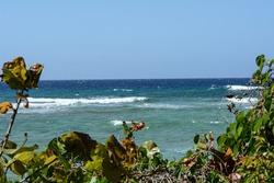 Flora and fauna of Cuba