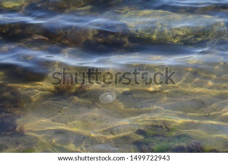 flora and fauna under water, sea #1499722943