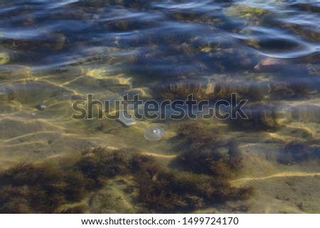 flora and fauna under water, sea #1499724170